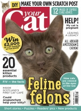 Your Cat - March 2015