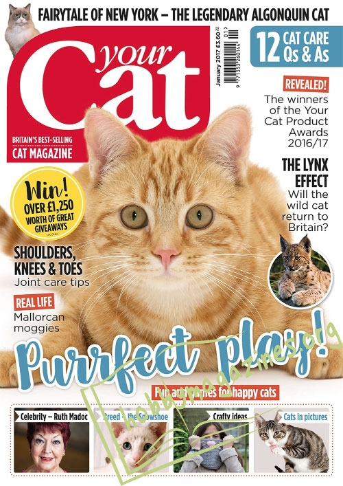 Your Cat - January 2017
